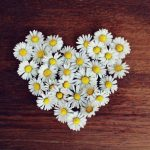 daisy, heart, daisy heart