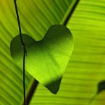 green, leaf, heart